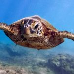 3,000+ Experts Urge Governments to Protect, Restore World's Oceans
